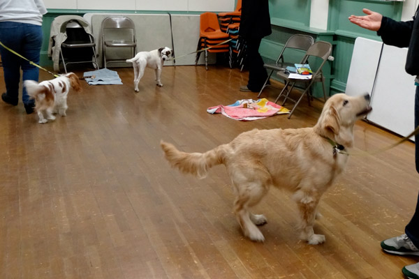 Fingers And Paws Dog Training