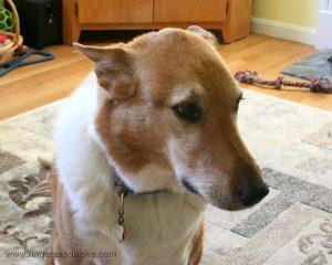 Dog with sad face