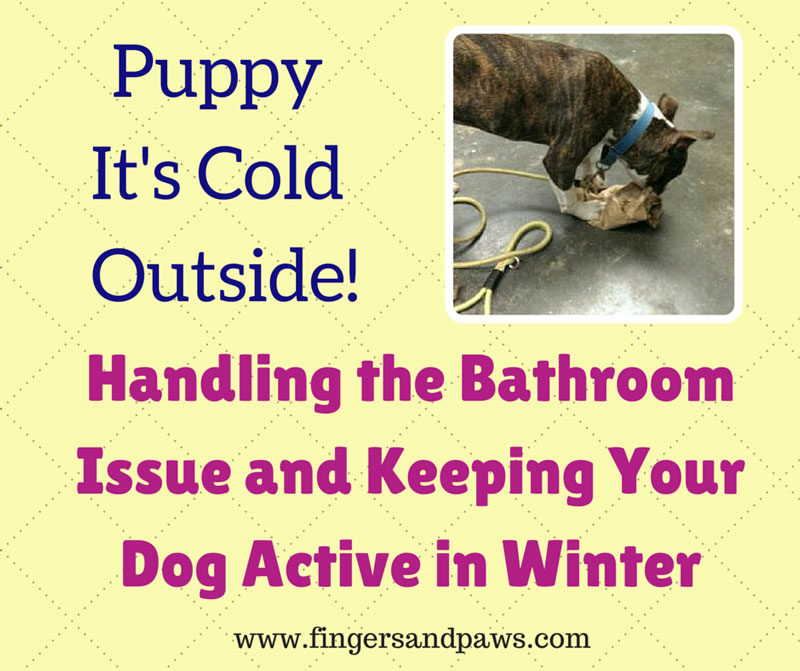 It 39 s cold outside how to keep your dog active in winter - Keeping outdoor dog happy winter ...