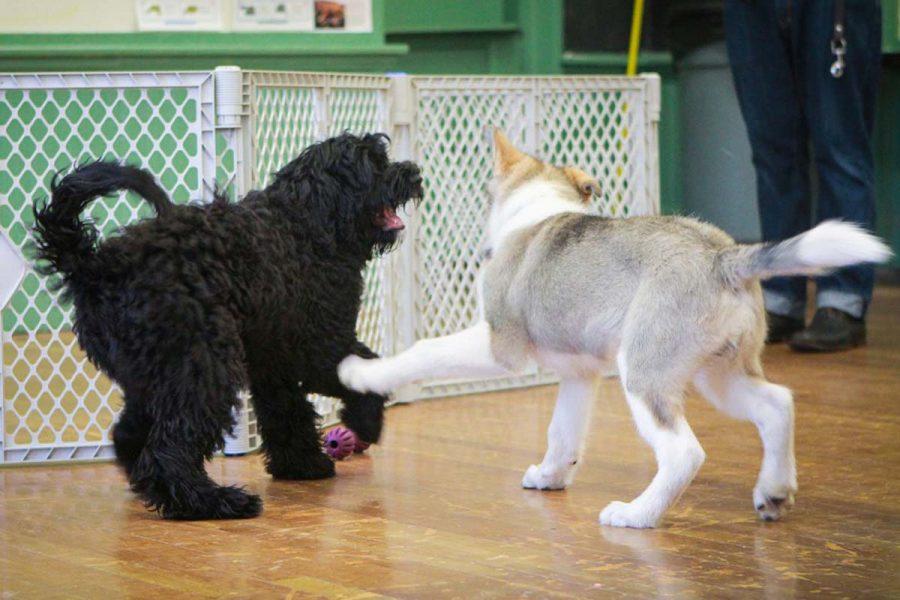Social Puppy 2